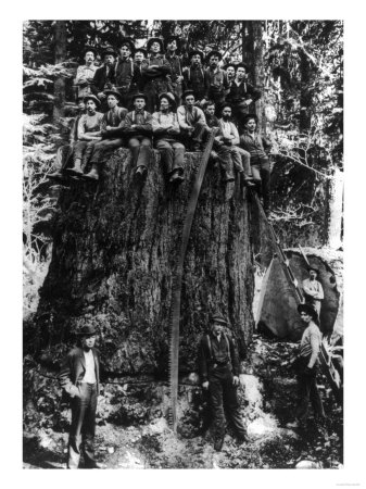 Lumberjacks prepairing Fir Tree for St. Louis World's Fair Photograph - Washington State Reproduction d'art