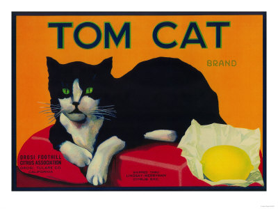 Tom Cat Lemon Label - Orosi, CA Poster by  Lantern Press