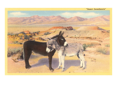 Desert Sweethearts, Nuzzling Burros Posters