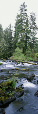 Klawock River and Surrounding Forest in Tongass National Forest Photographic Print by Rich Reid
