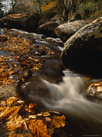 Fox Creek and Autumn Leaves in the Jefferson National Forest Photographic Print by Raymond Gehman
