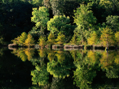 Cypress Trees Reflected in Water, Mountain Fork River Photographic Print by John Elk III