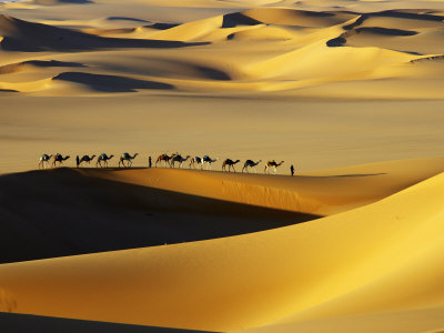 Tuareg Nomads with Camels in Sand Dunes of Sahara Desert, Arakou Photographic Print by Johnny Haglund