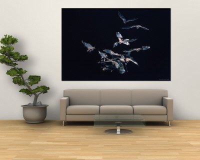 Pack of Spear Nosed Bats in Flight at Yale's Kline Biology Lab Premium Wall Mural by Nina Leen
