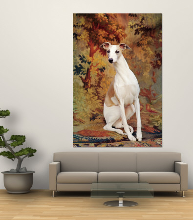 Portrait of Whippet Chosen Best in Show at the 88th Annual Westminster Kennel Club Dog Show Premium Wall Mural by Nina Leen