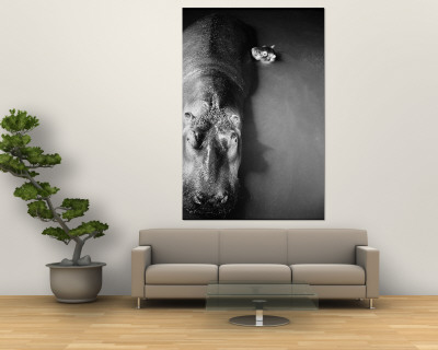 "Mother Hippo ""Bebe"" and Her Daughter Premium Wall Mural by Mark Kauffman"