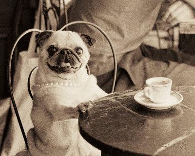 Cafe Pug Art by Jim Dratfield