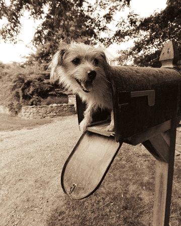 You've Got Mail Posters by Jim Dratfield