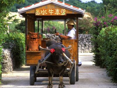 Water Buffalo Cart, Taketomi Island, Okinawa, Japan Photographic Print by Rob Tilley