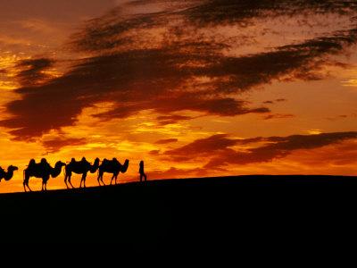 Camel Caravan Silhouette, Silk Road, China Fotografik Baskı