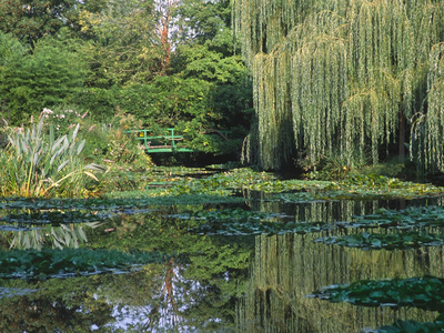 Claude Monet's Garden Pond in Giverny, France Fotografie-Druck