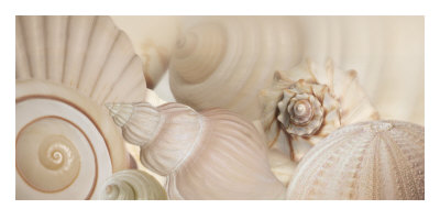 Shells I Prints by Jan Lens
