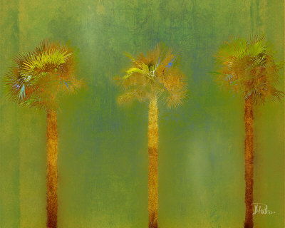 Three Palms II Kunstdruck