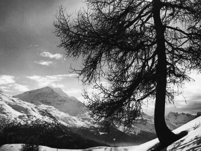 Tree on Alpine Slopes of Winter Resort. Peak in Background in Piz Corvatsch Fotografiskt tryck
