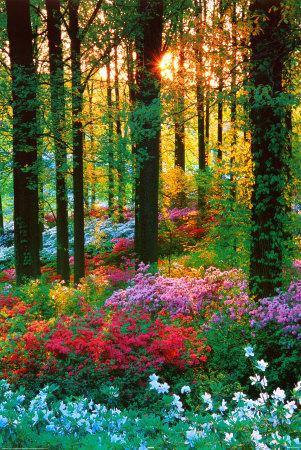 Floresta de flores Pôster