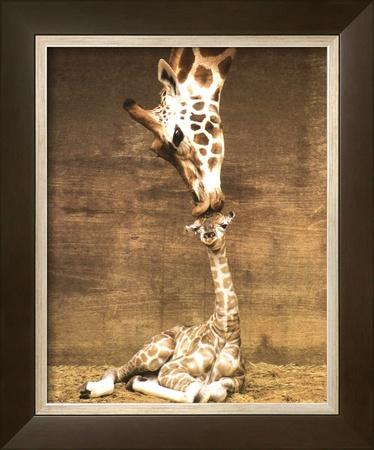 Giraffe, First Kiss Art by Ron D'Raine