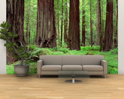 Trail, Avenue of the Giants, Founders Grove, California, USA Wall Mural – Large