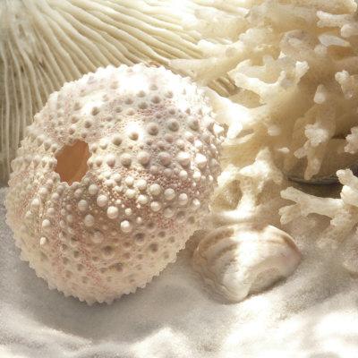Koral og strandskal I, Coral Shell I Kunsttryk