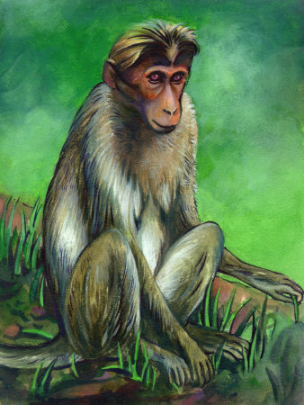 Portrait of Macaque Monkey Premium Poster