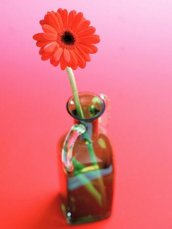 Arrangement of Beautiful Blossoming Gerbera Daisies Photographic Print