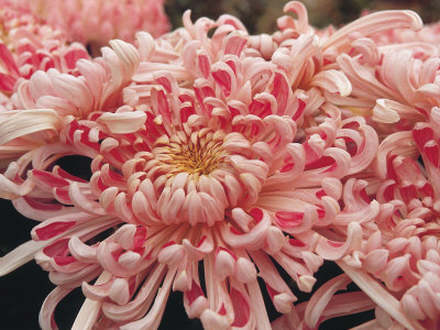 Close-Up of Beautiful Blooming Flowers Photographic Print