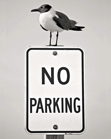 No Parking Posters by Stephen St. John