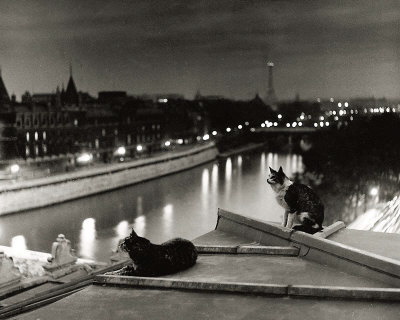 Paris, Cats at Night Art Print