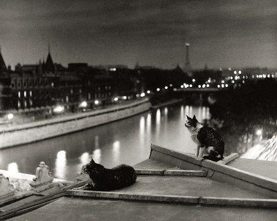 Paris, Cats at Night Prints by Robert Doisneau