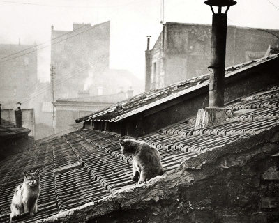 Cats on a Roof, Paris I Art Print