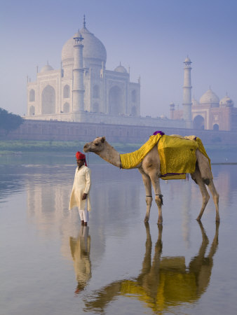 Camal and Driver, Taj Mahal, Agra, Uttar Pradesh, India Photographic Print by Doug Pearson