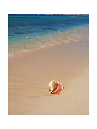 Conch Shell On The Seven Mile Beach Photographic Print by George Oze