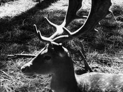 Fawn Photographic Print by Vincenzo Balocchi
