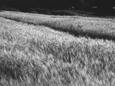 Extent of Wheat Photographic Print by Vincenzo Balocchi