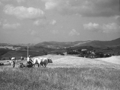 Farmer Ploughing Photographic Print by Vincenzo Balocchi
