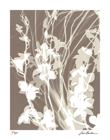 Flower Shadow I Giclee Print by Lois Bender