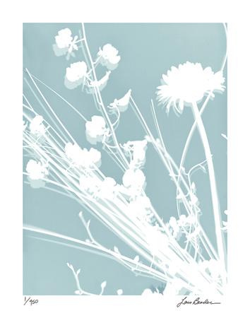 Flower Shadow II Giclee Print by Lois Bender