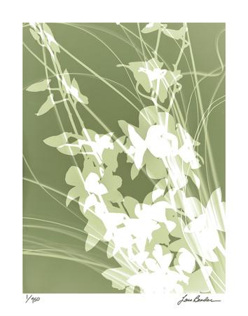 Flower Shadow III Giclee Print by Lois Bender