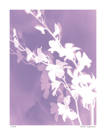 Flower Shadow V Giclee Print by Lois Bender