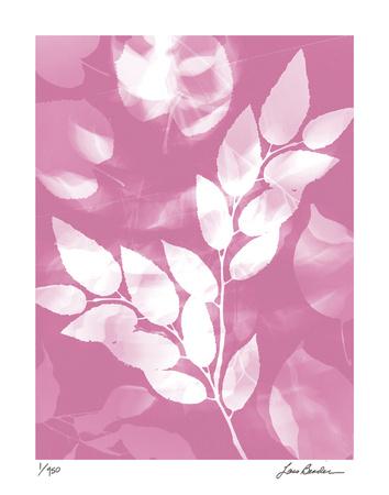 Flower Shadow VI Giclee Print by Lois Bender