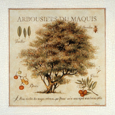 Arbousiers de Maquis Art by Pascal Cessou