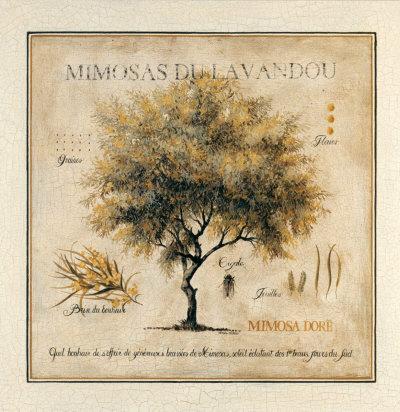 Mimosas du Lavandou Prints by Pascal Cessou