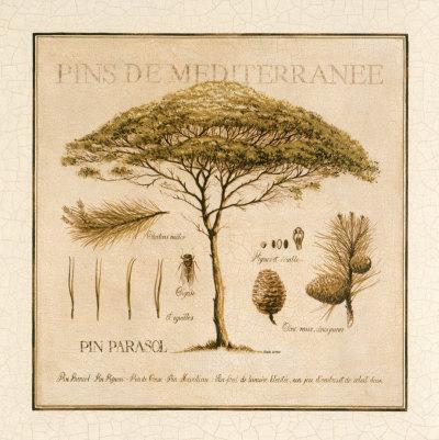 Pins de Mediterranee Posters by Pascal Cessou