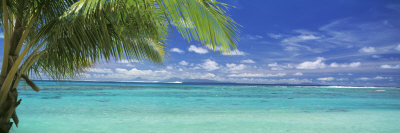 Palm Tree on the Beach, Huahine Island, Society Islands, French Polynesia Photographic Print by  Panoramic Images
