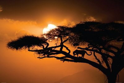 Afrikansk himmel Plakat