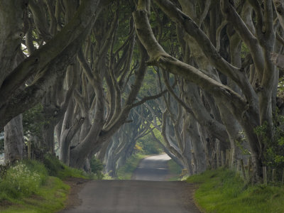 Tree Lined Road known as the Dark Hedges Near Stanocum, County Antrim, Ulster, Northern Ireland, UK Photographic Print by Neale Clarke