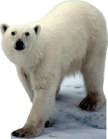 Polar Bear Cardboard Cutouts