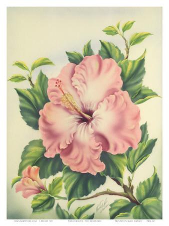Hawaiian Pink Hibiscus, c.1940s Prints by Ted Mundorff