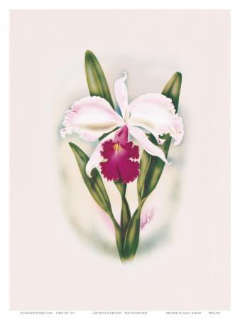 Hawaiian Cattleya Orchid Art by Ted Mundorff