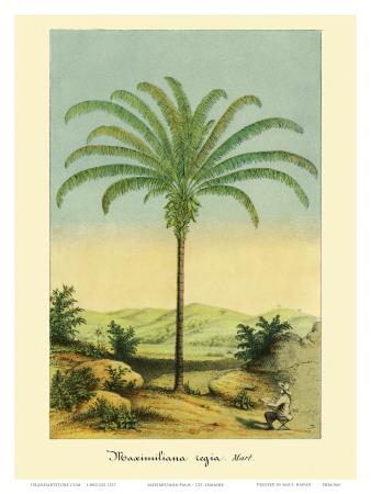 Maximiliana Palm Tree, Botanical Illustration, c.1854 Print by Ch. Lemaire