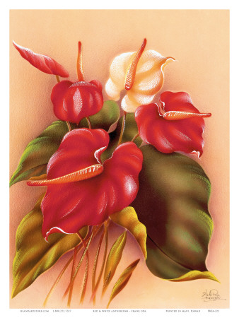 Hawaiian Red and White Anthuriums c.1940s Poster by Frank Oda